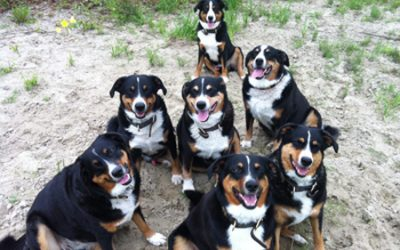 Tierkommunikation – Tiere als Wegbegleiter und Richtungsweiser