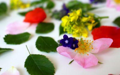 Bachblüten und die 7 Gefühlsgruppen