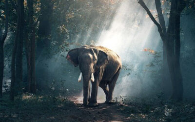 Was hat ein Elefant mit deinen Glaubensätzen zu tun? Eine Geschichte zum Aufwachen.