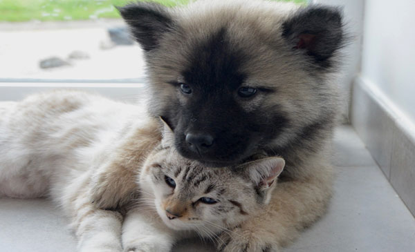 Tierkommunikation- Die Sprache des Herzens